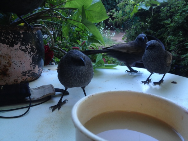 Afternoon Tea with friends