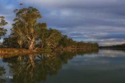 The Murray and its River Red Gums
