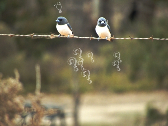 question birds for website